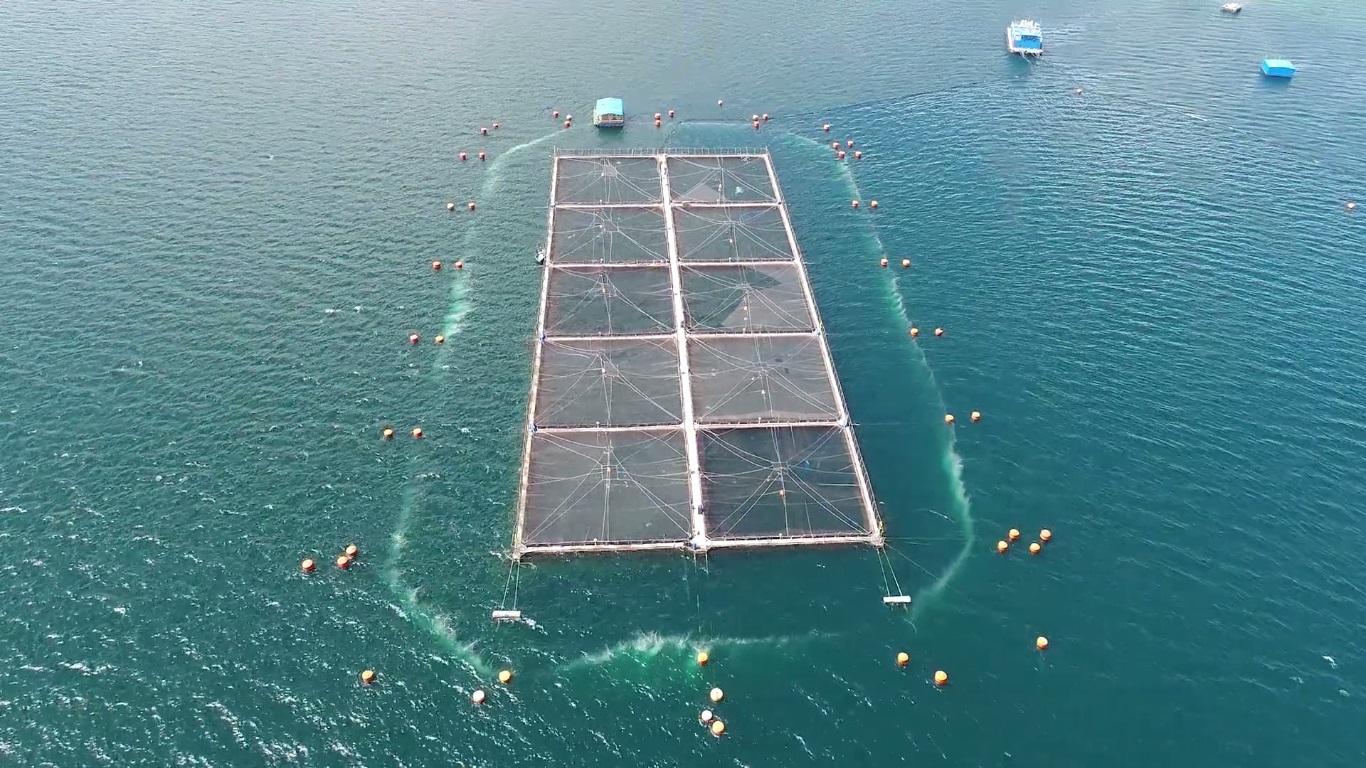 Marine Harvest Todo por la Ciencia