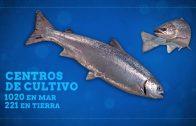 Capítulo 3 Tercera Temporada: Micófilos Chile